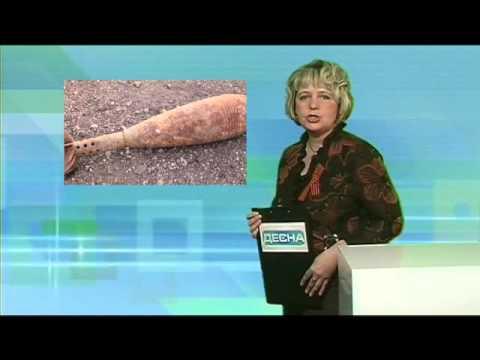 Десна-ТВ: День за днем от 29.04.2016