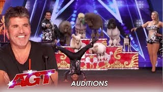 LEAK: The CUTTEST Dog Act and Simon Cowell Is Real Happy! | America's Got Talent 2019