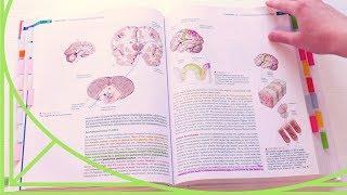 Обзор Учебников на Английском. Сравнение с Русскоязычными Учебниками