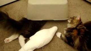Cats and Parrot playing with box Part 3