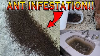 INSANE ANT INFESTATION IN MY APARTMENT! I CAN