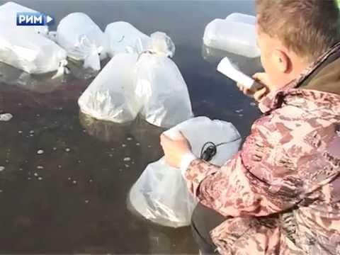 рыбалка на озере большой сунгуль каменск уральский