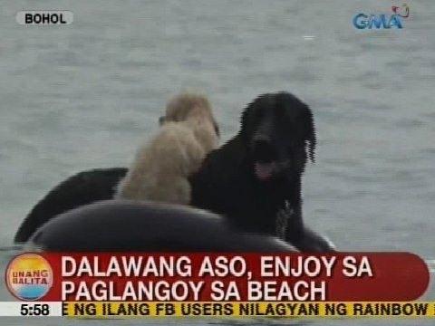 UB: 2 aso, enjoy sa paglangoy sa beach sa Bohol