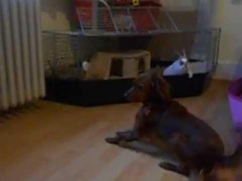 Unsere Hasen und Hund Total verspielt und Lustig