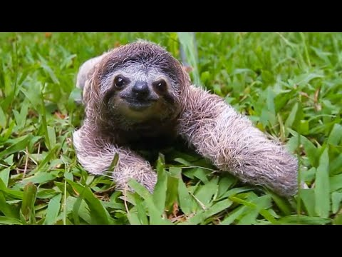 Why Are Sloths So Popular These Days?