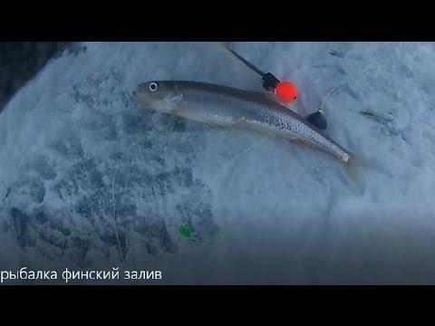 рыбалка финский залив форум 2017