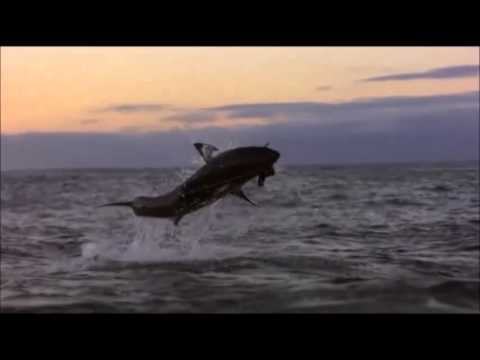 Ultimate Air Jaws Great White Shark ( Weisse Haie ) / Ace Ventura - Maximum Overdrive  Goa Trance