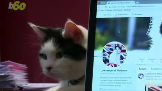 British Embassy Appoints Cat to Position of 'Chief Mouser' in Jordan Office