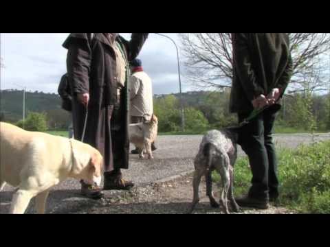 Marcia contro l'avvelenamento degli animali