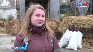 """Животные в """"Пряжинском"""" спасены от голодной смерти"""