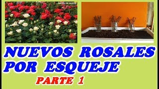 Como Hacer Esquejes De Rosal 1ª PARTE //  How To Make Cuttings Of Rose Part 1