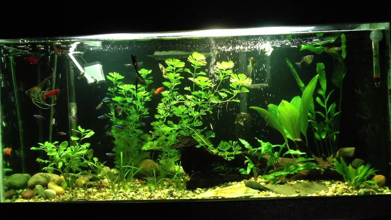 1 awesome 20 gallon freshwater planted tank youtube for 20 gallon fish tank decoration ideas