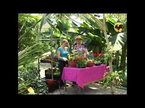 Выращивание цветов в контейнерах – контейнерный сад своими руками