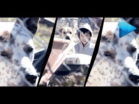 Music Video Flicker Effect - Sony Vegas