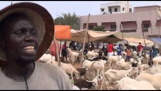 Tabaski | Le mouton à quel prix