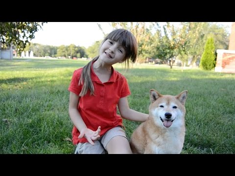 Shiba Inu (Kitsu) and 7-year-old (MissObservation) play Foxcatcher (tag)