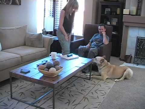 Dog Training: Stop Barking And Jumping On Guests video