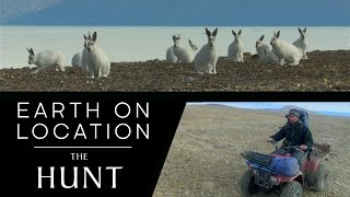 Filming Arctic Wolves and Hares - The Hunt - #EarthOnLocation Vlog - BBC Earth Unplugged