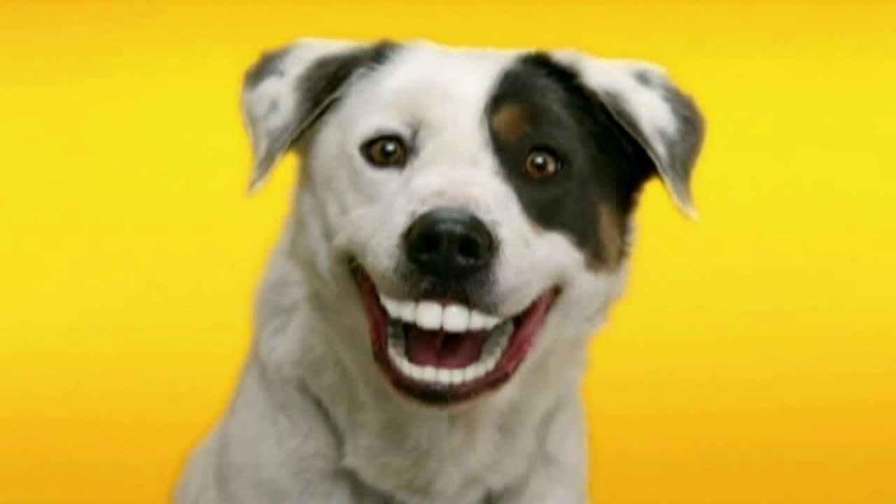 pedigree denta stix zubn237 prot233zy pro psy reklama youtube