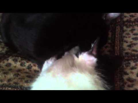 Легкая эротика! Кот Бублик и кошка Соня (семейная пара)