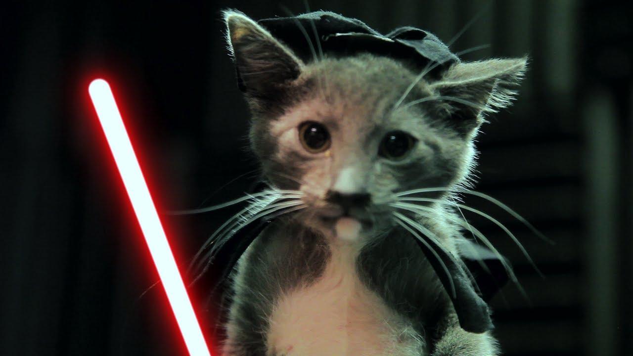 jedi kittens strike back youtube