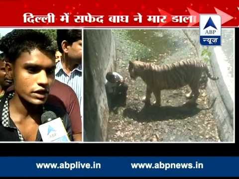 Witness narrates the whole incident of Delhi zoo, says youth slipped and fell into its enclosure