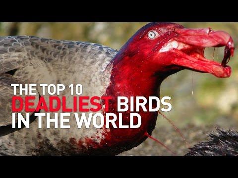 Top 10 Deadliest Birds in the World