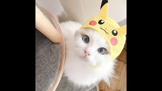 Try Not To Laugh | Funny Kittens Video Compilation 2019