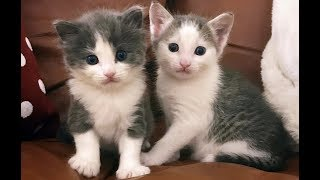 LIVE: Adoptable Kittens Meowing, Playing, and Exploring in New Kitten Room | The Dodo LIVE