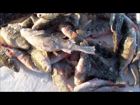 ребро рыбака