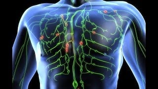 HOW IT WORKS: The Lymphatic System