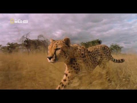 Хищники Африки  Гигантские убийцы