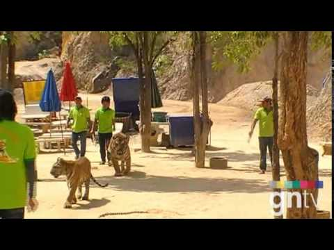 Thailand's Tiger Temple