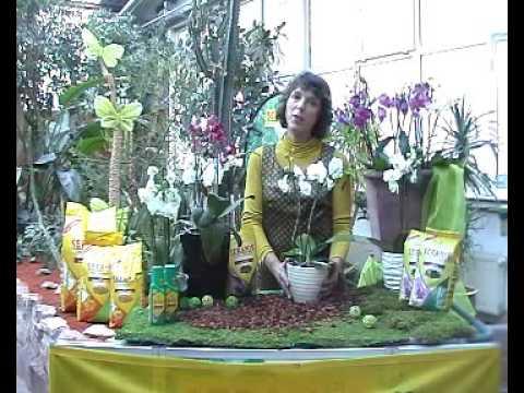 videoanleitung orchideen richtig in seramis umtopfen. Black Bedroom Furniture Sets. Home Design Ideas