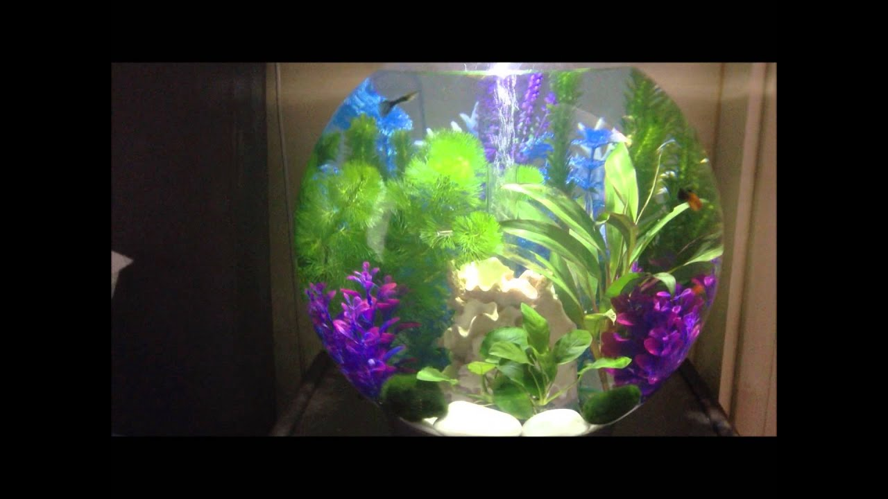 Baby biorb 30l updated new live plants and moss balls planted