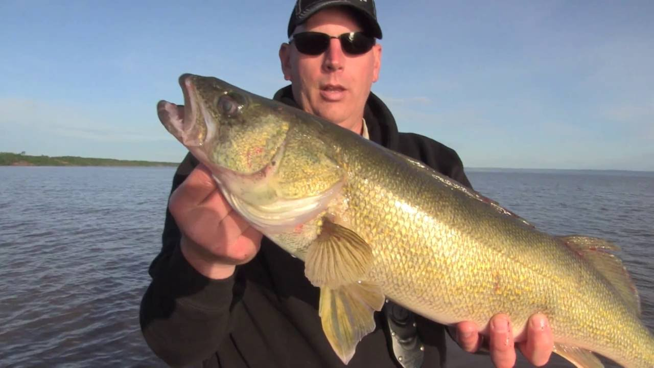 Lake superior walleye trolling fishing central for Fish in lake superior