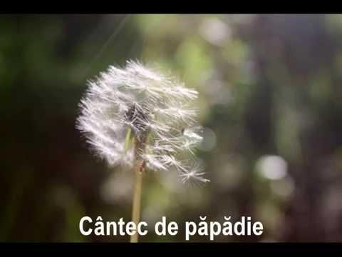 Nicu Alifantis - Cântec De Păpădie