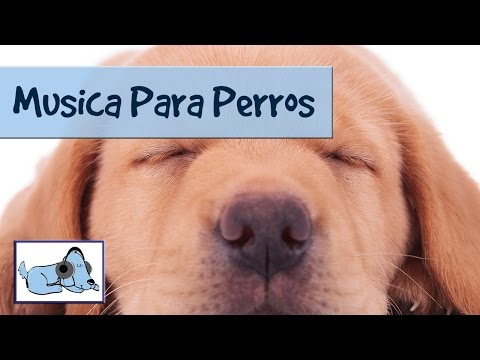 Música diseñada para relajarse perros, cachorros.Música tranquilizante para los animales domésticos
