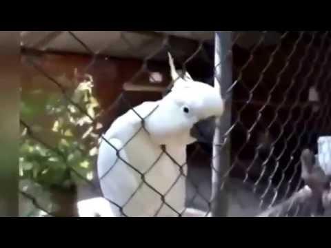 Самые смешные и нелепые моменты из жизни животных