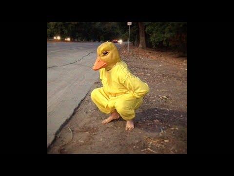 Si ves a este PATO por la calle, corre rápido y pide AYUDA!!! (Pato Salvaje) 🐤🔥