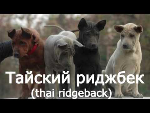 #най редки породи кучета