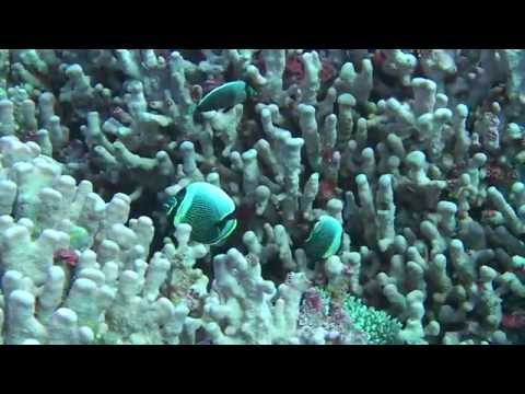 Marine Environment of Pitcairn