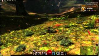 Guild Wars 2: Top 10 Features