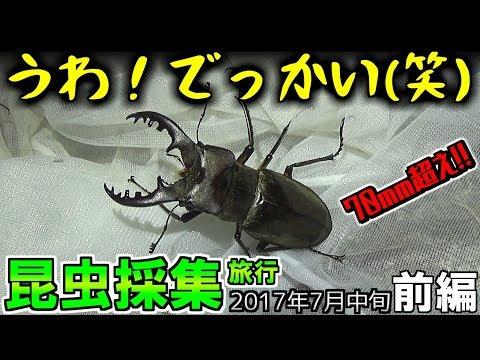 無料テレビでGoodSonJP【昆虫採集】を視聴する