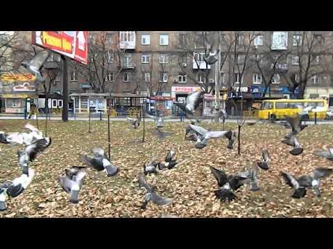 Экскурсия по хостелу на улице Вышгородская