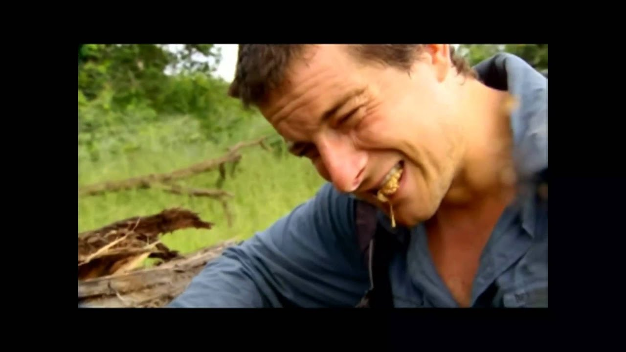 Ultimate Survival Bear Grylls Eating Giant Larva Youtube