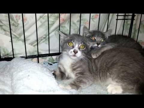 Mean Feral Kittens
