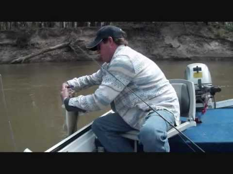 MURRAY COD FISHING.lures and bait