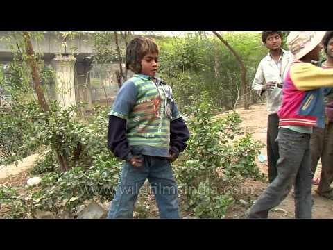 Lost in trash : Delhi rag pickers