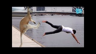 Animals are Mean Sometimes    Funny Videos 2018